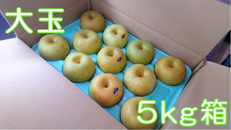 画像1: 幸水 大玉5kg箱(12〜10個入り)
