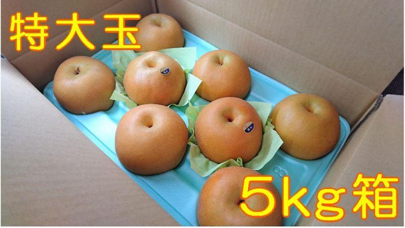 画像1: 豊水 特大玉5kg箱(8〜7個入り)